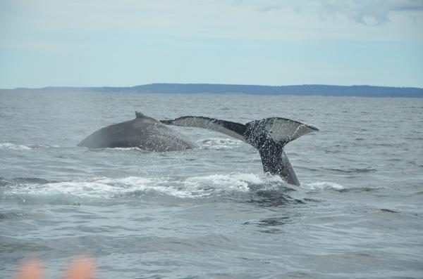 baleine et baleineau