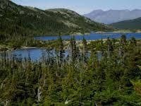 forêt boreale